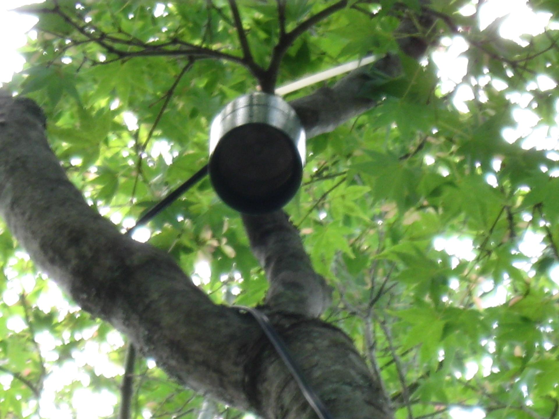 TREE DOWN LIGHTING